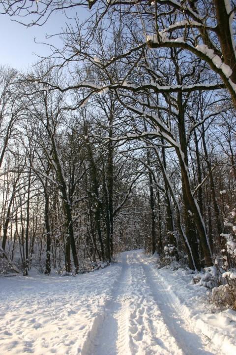 Au Schnee 3.jpg