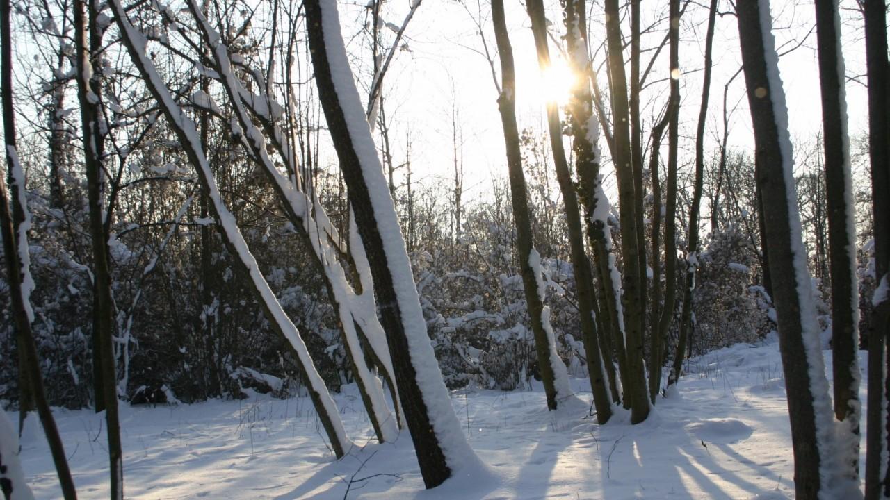 Au Schnee 5.jpg