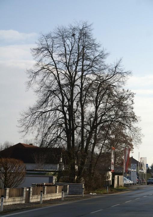 Wiener Straße 4.jpg
