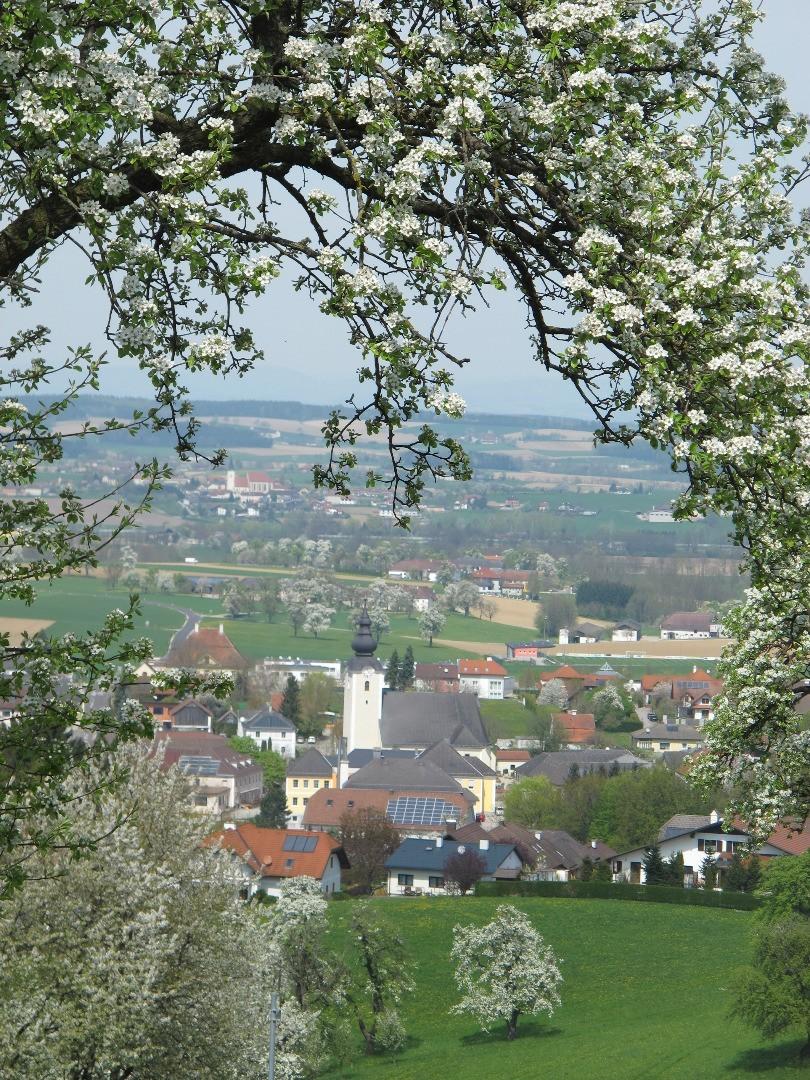 Baumblüte v Pimshof.JPG