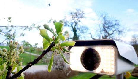 Birnbaumblüte cam.jpg