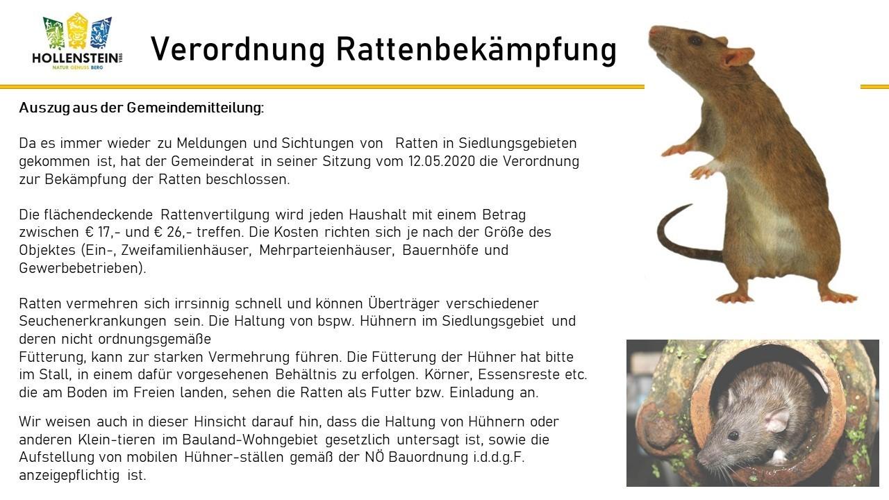 Rattenbekämpfung1.jpg