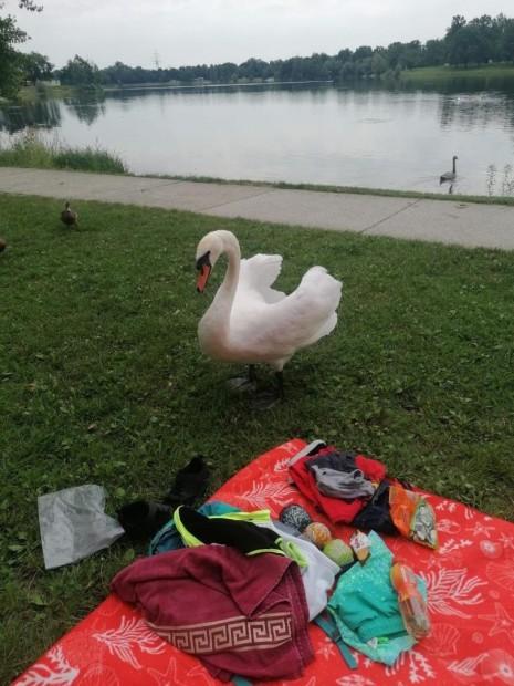 Baden am Pichlingersee (4).JPG