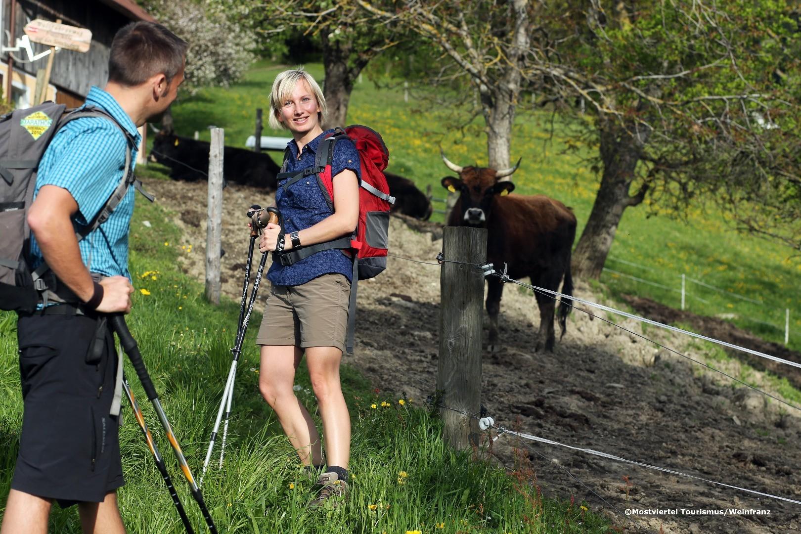 Wandern am Sonntagberg 4 - weinfranz.at.jpg